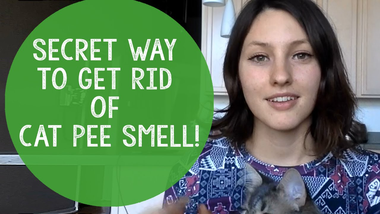 How To Remove Cat Litter Smell. Guaranteed Method To Permanently Get Rid Of  Cat Pee Odor.   YouTube