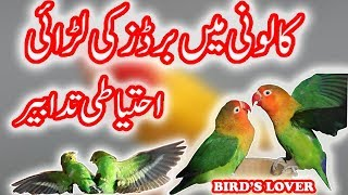 why birds fights in colony  reasons and how to save your birds Video No. 77.