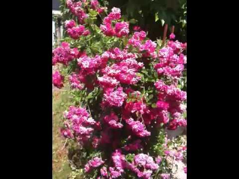 Mein schöner Garten - YouTube