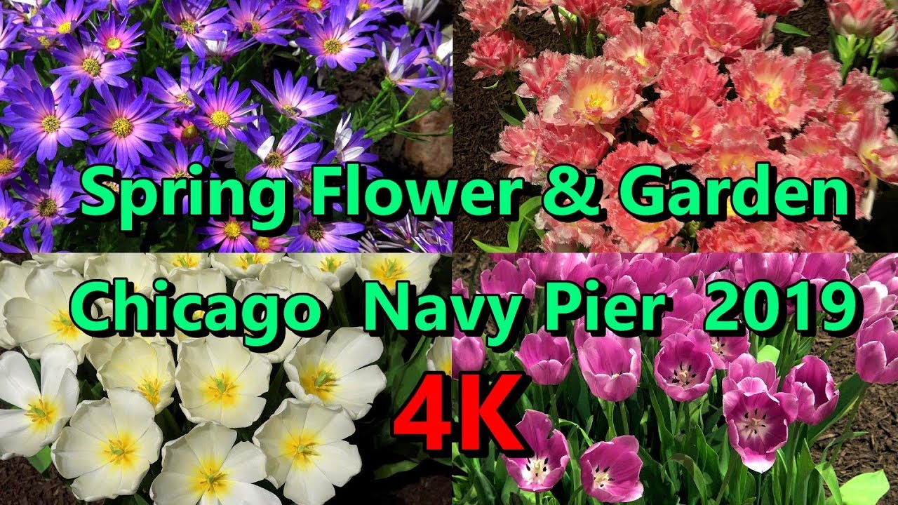 Chicago Flower Garden Spring Show 4k Tablescapes Navy