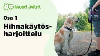 Koiran hihnaharjoittelu, osa 1