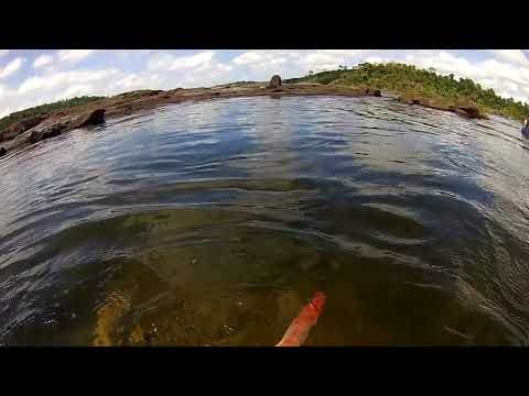 Snorkeling For Plecos And Other Fish At Rio Xingu
