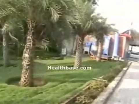 Ideal Beach Resort Chennai - Medical Tourism Recuperation, Healthbase