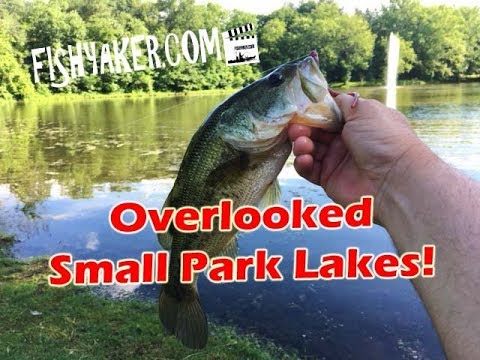 Don't Overlook Small Town Park Lakes for Quality Largemouth Bass! - Fishyaker