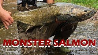 Fall Salmon Run | Ontario Fishing