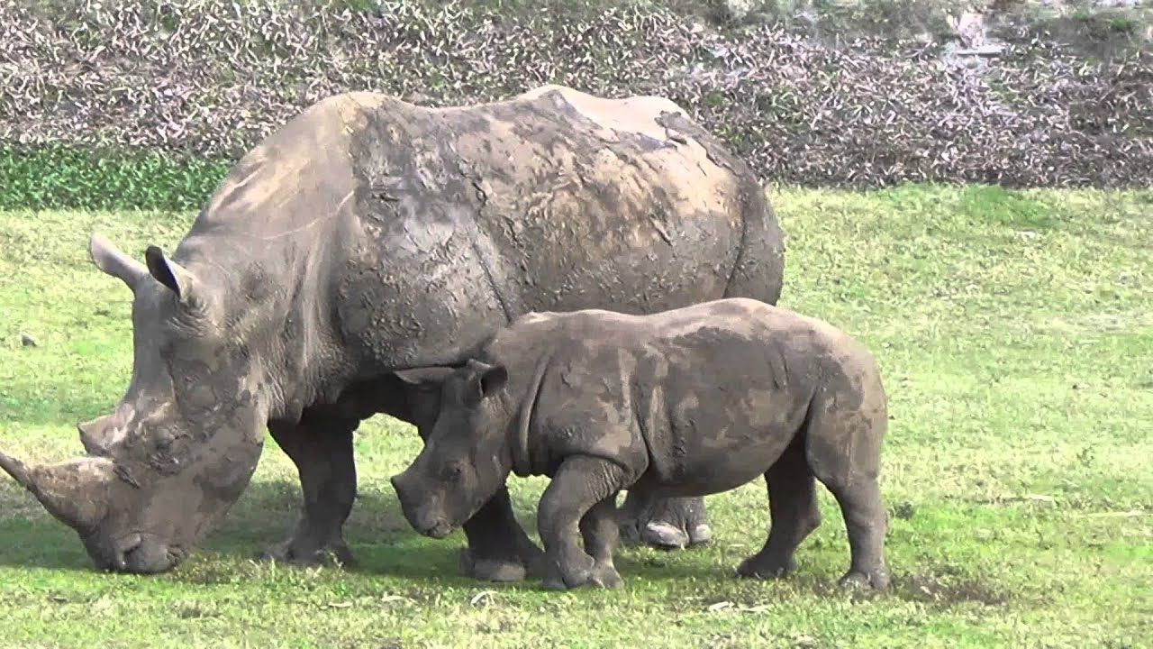 busch gardens serengeti safari. Serengeti Safari Tour On-Ride Video Busch Gardens Tampa E