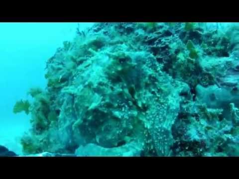 SCUBA diving in Adriatic sea (Croatia)