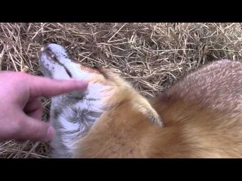 Finger toothbrush - best foxy brushy brushy