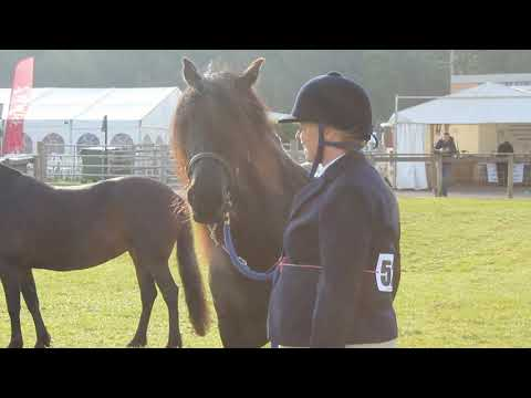 The Dales Pony