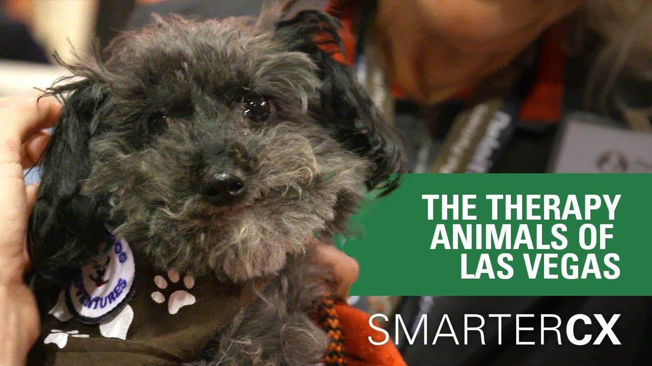 Home Love Dog Adventures Pet Partners Of Las Vegaspet Partners