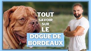 Race de chien Dogue de Bordeaux : caractère, dressage, comportement, santé de ce chien de race...