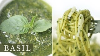 Basil Pesto Pasta Sauce Recipe 바질 페스토 파스타 소스 만들기