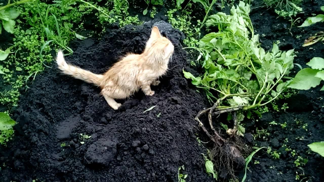 Как отучить кошек гадить в огороде