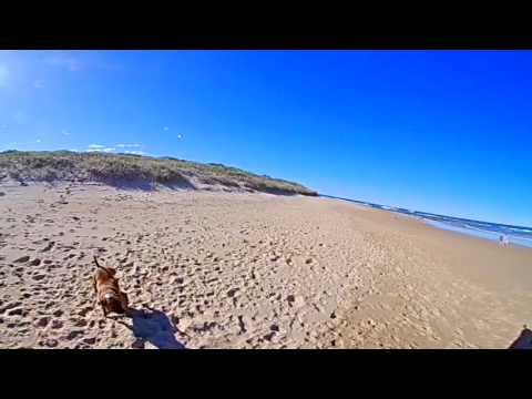 VR 360 Beach Fetch With Therapy Dog - Corrimal Beach, Australia