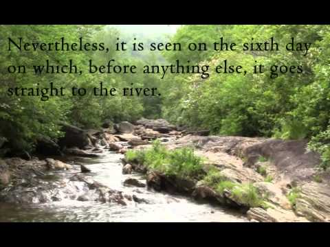 Quote of the day - St. Francis de Sales - YouTube