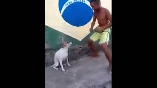 Funny Dance: A Dog Dancing with Small Boy
