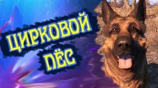 # 1 Fallout 4 - Приколы( Прохождение, Нарезка, Монтаж)