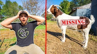 My Pet Goat ESCAPED from the BACKYARD FARM!!! (DISASTER)