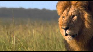 African Cats: Fang - Clip