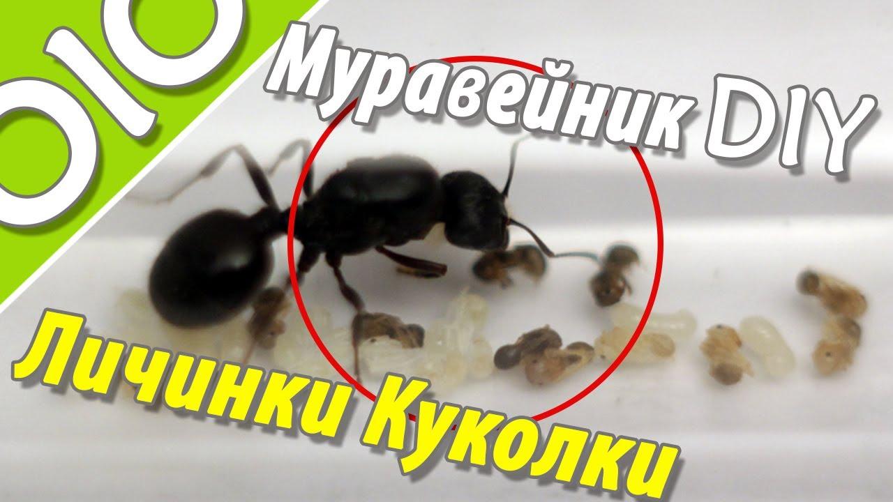 Из чего сделать муравейник своими руками фото 81