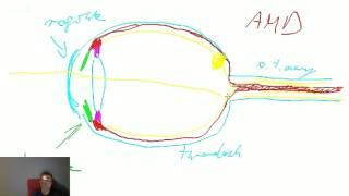 Darmowe Korepetycje z Biologii: Narządy zmysłów, układ hormonalny