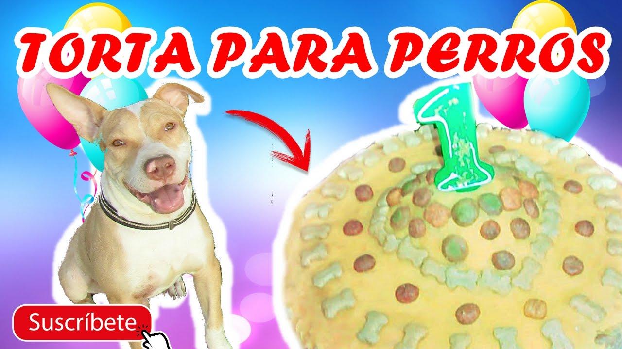 Como Hacer Torta Para Perros 100 Saludable