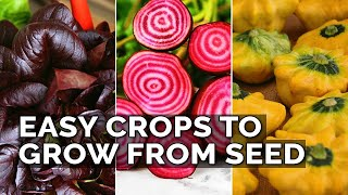 9 Easiest Edibles to Grow From Seed!