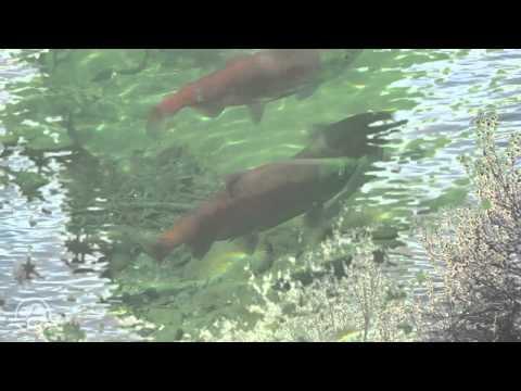 Aquatic Health - Yoho National Park