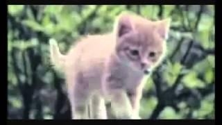 EvGeniY BeliY feat INCity  - Подари мне рай (клип в исполнении котят) очень красиво =*