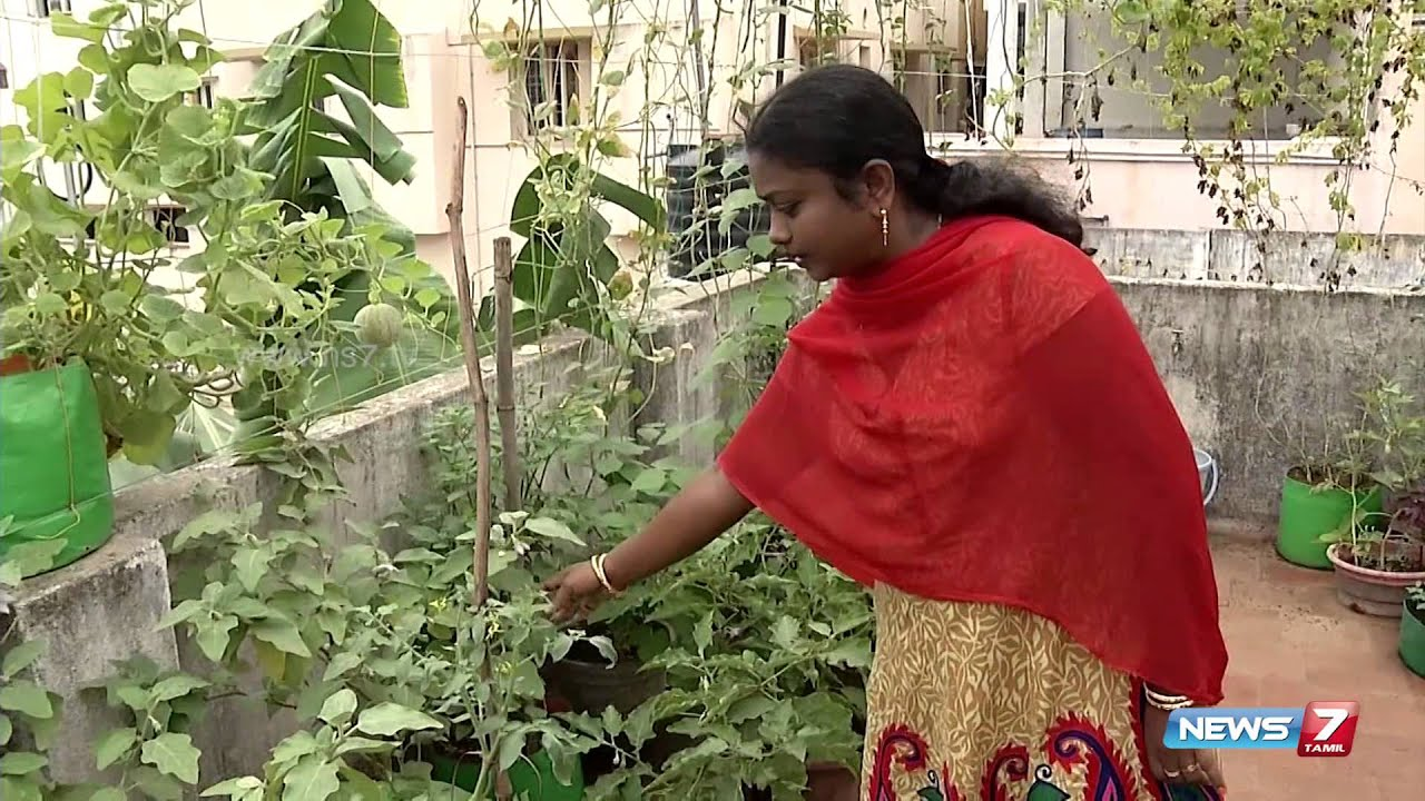 Organic terrace garden is heaven forever poovali news7 for Terrace vegetable garden ideas in tamil