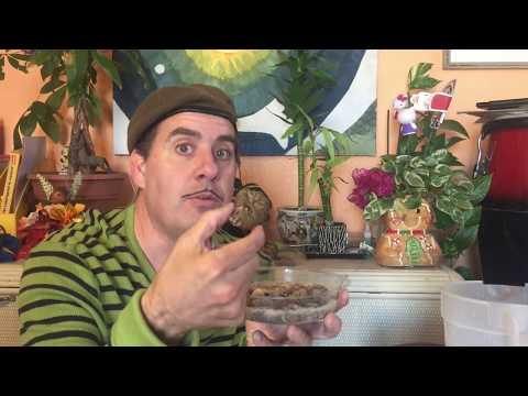 How To Grow Resurrection Plant