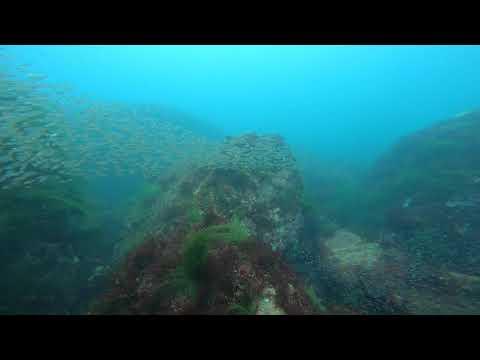 カメ岩のお魚天国たち♪