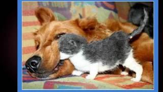 Собака бывает кусачей...
