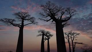 Тур на Мадагаскар: Лемуры, Аллея Баобабов и рифов