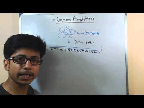 genome-annotation