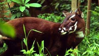 Sao La - Động vật quý hiếm bậc nhất thế giới tại Việt Nam.