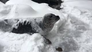 Animals at the Oregon Zoo enjoy a snow day