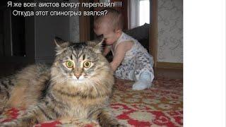 СМЕШНЫЕ ПРИКОЛЫ с животными. ВЕСЕЛЫЕ ВИДЕОРОЛИКИ.Кошка показывает кун фу .