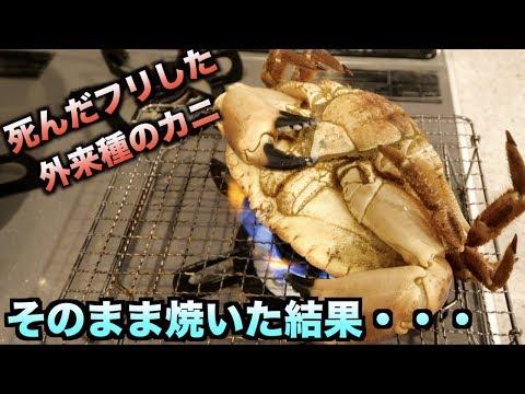 完全に死んだフリした外来種のカニをそのまま焼いたら大惨事に・・・