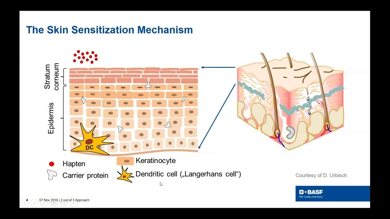 Use of Non-animal Methods for Skin Sensitization Testing