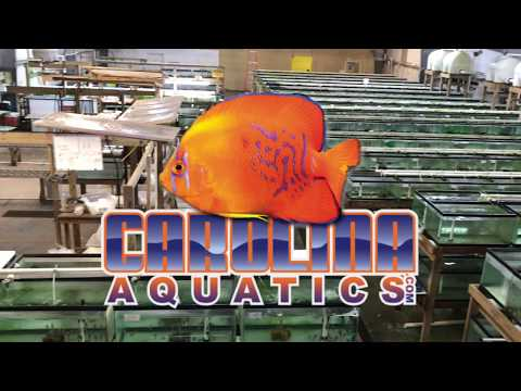 Behind The Scenes Of A Tropical Fish Wholesaler