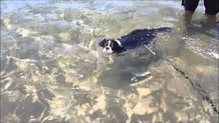 今年も犬掻きで泳いでいました。 急にクロールは、できないようです。 ...