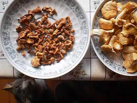 Лисички грибы, сушка без регистрации и смс