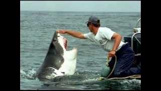 INCREDIBLE SHARK ATTACK - INCREDIBILE ATTACCO SQUALI