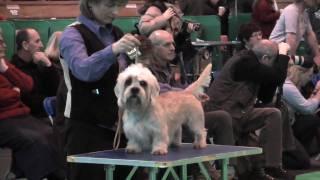 Dandie Dinmont Terriers at Crufts 2010  Postgraduate Dog
