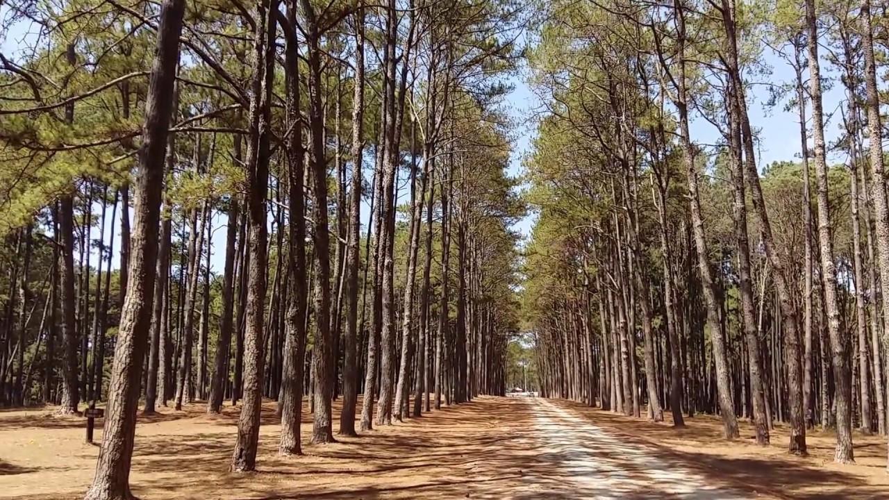 Bo Kaeo Pine Tree Garden-Hot Chiangmai - YouTube