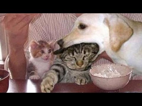 Funny dogs annoying cats – Cute animal compilation