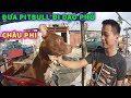 Cuộc Sống ở Châu Phi - Vlog #8 : Đưa Chó PitBull Đi Dạo Biển ở Châu Phi ( ANGOLA)