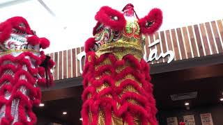 Lion Dance for Grand Opening