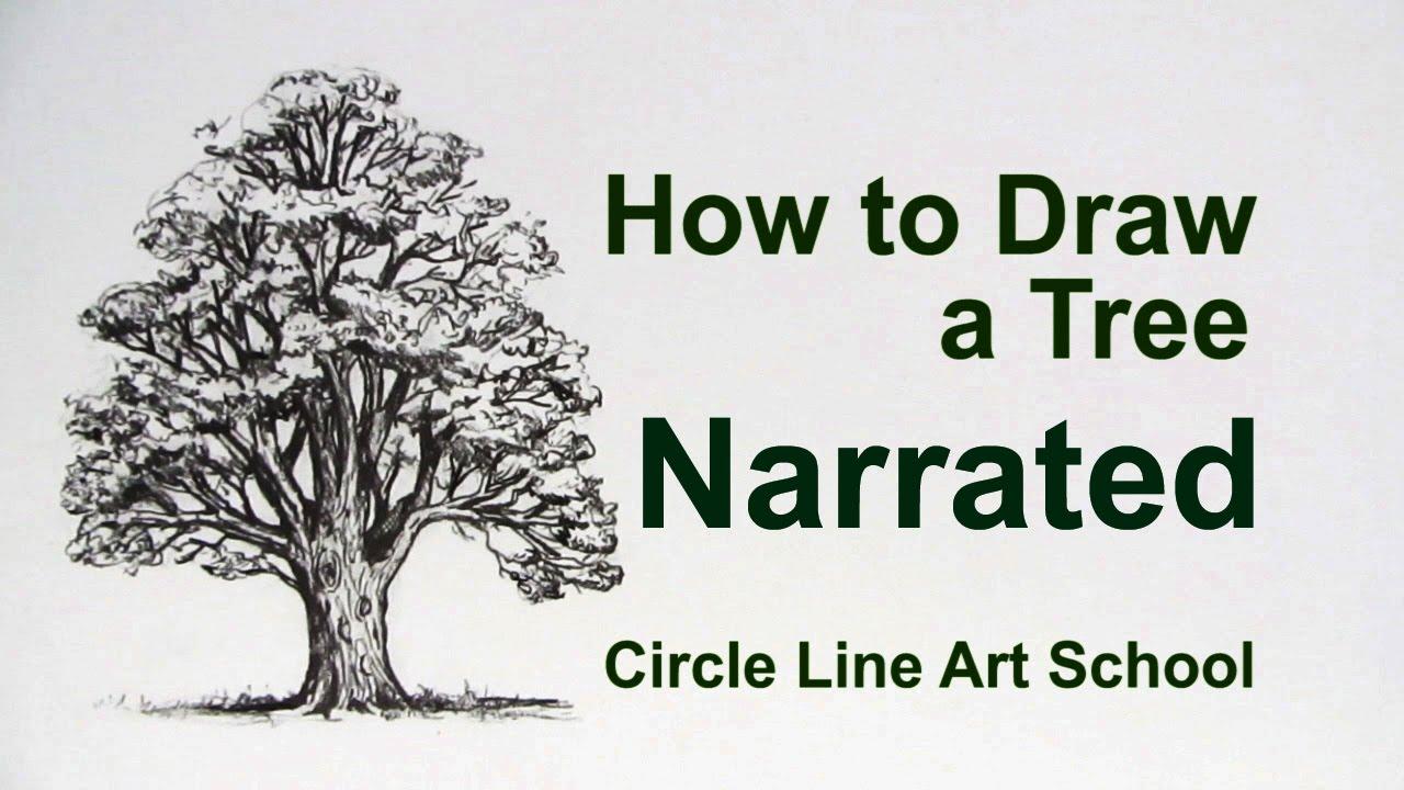 Uncategorized How To Draw A Oak Tree how to draw a tree oak youtube